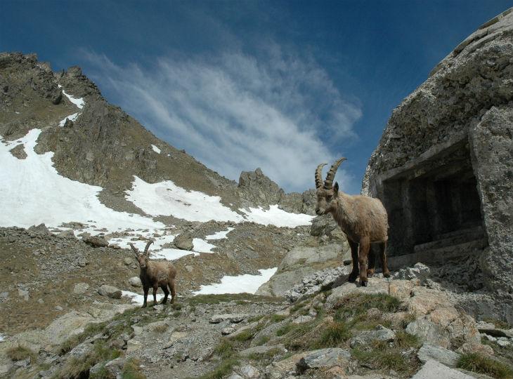 faune et flore des montagnes du Mercantour